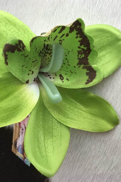 lime green orchid